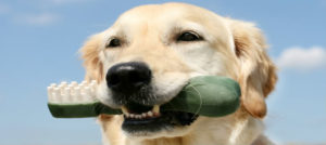 dogwithbone (1)